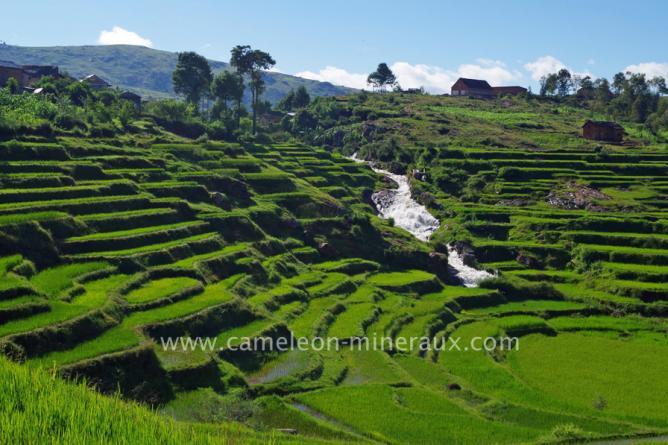 Belles rizières en terrasse à la saison des pluies