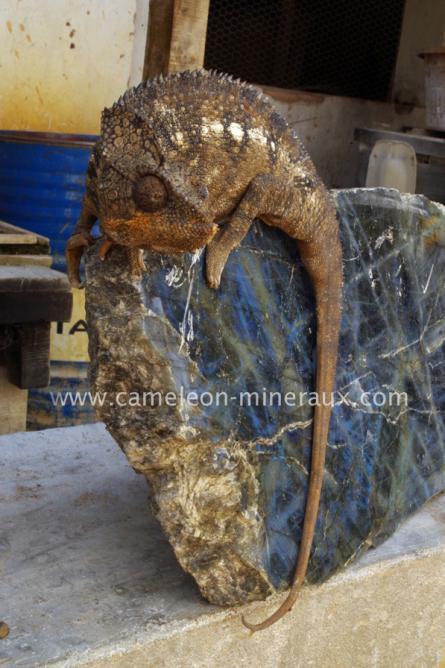 Et oui c'est bien caméléon minéraux à l'atelier